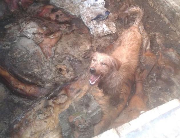 Psi bačeni u rupu petface