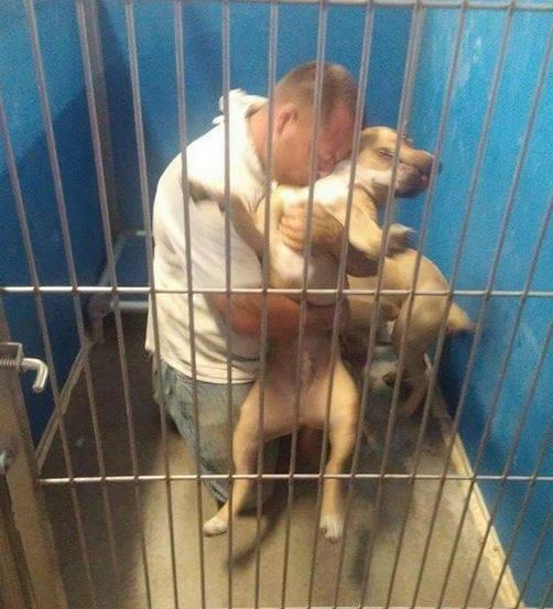 Susret sa ukradenim psom petface