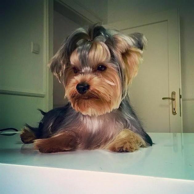 ULEPŠAJTE svoje pse petface