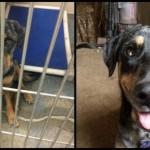 Evo kako ćete udomljavanjem spasiti život jednom psu! (FOTO)