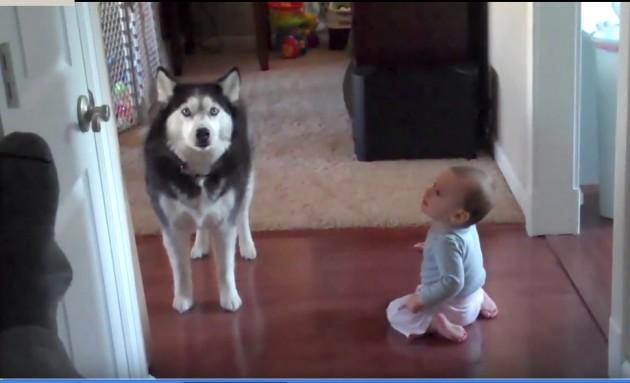 beba i pas petface