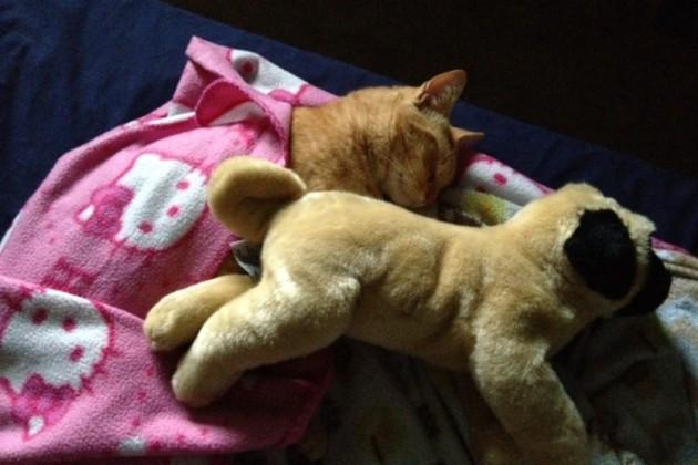 dečak uspavljuje mačka petface2