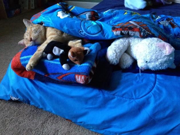 dečak uspavljuje mačka petface
