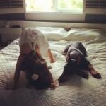 devojčica i pas petface