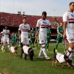 BRAVO: Fudbaleri na utakmicu izašli sa psima kako bi podstakli udomljavanje! (VIDEO)