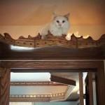 igralište za mačke petface