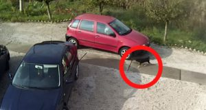 izbacila psa iz automobila petface