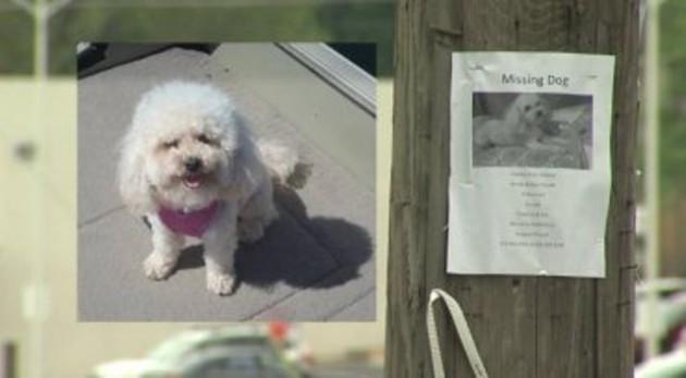 izgubljeni pas petface