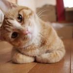 OTKRIVAMO: kako da zbunite svoju mačku