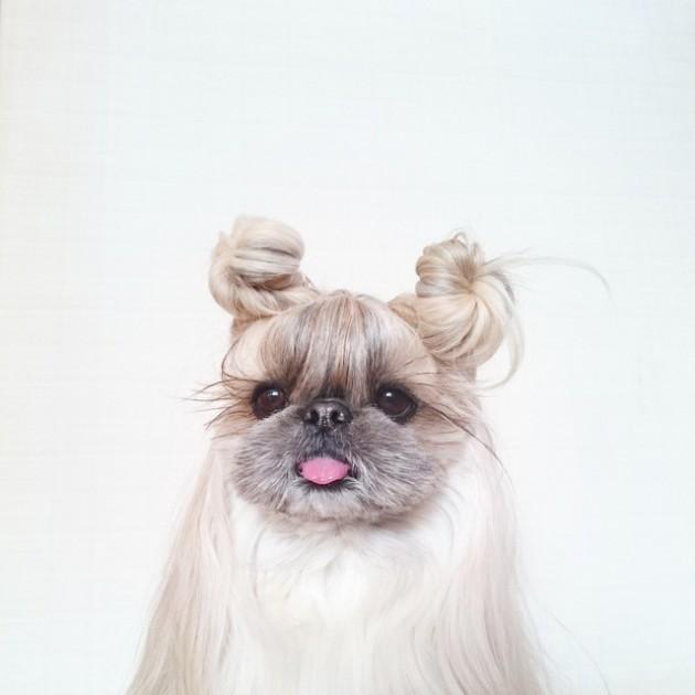 frizura ovog psa petface