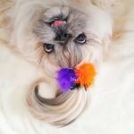CICA ZAVODNICA: frizura ovog psa osvaja ljude širom sveta