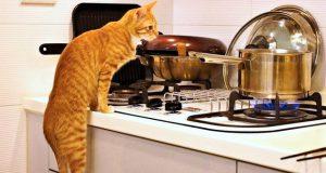 mačke vole kuhinju petface