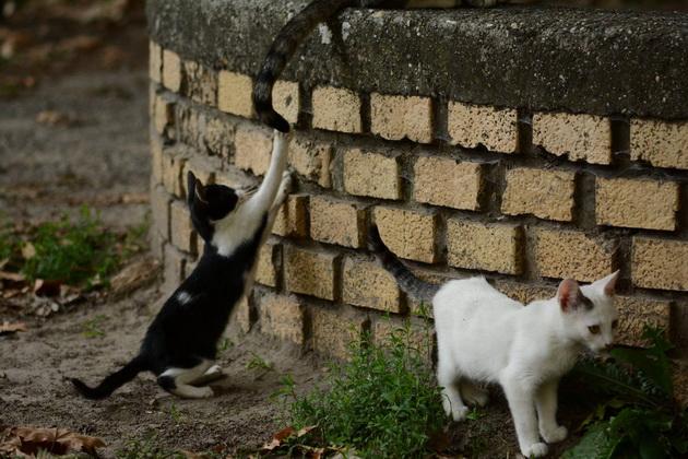 maca u kesi petface