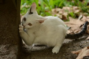 maca u kesi petface8