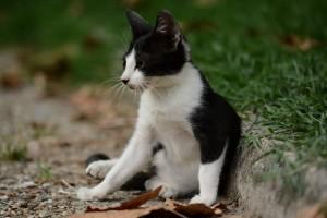 NOVI SAD: Devojčice se igrale gušenja maca u kesi! Macama HITNO potreban dom!
