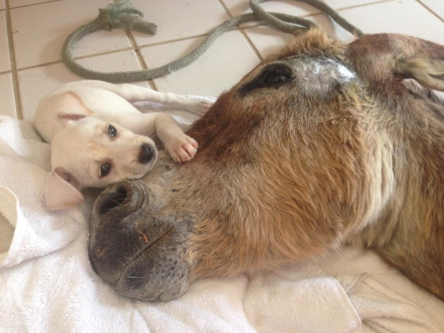magare koje je ostavljeno da umre petface