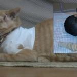HEROJSKI ČIN: mačak spasio dečaka