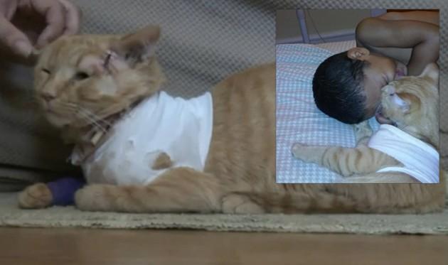mačak spasio dečaka petface