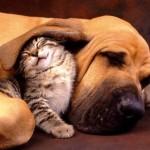 MIT ILI ISTINA: vole se kao pas i mačka