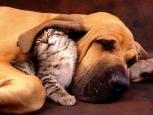 pas i mačka petface