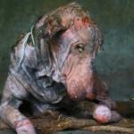 TRANSFORMACIJA: Bio je pas na samrti, a izrastao je u belog lepotana! (VIDEO)