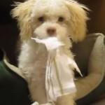 PRESMEŠNO: pas uhvaćen kako žvaće papir