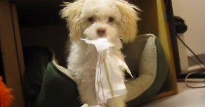 pas uhvaćen kako žvaće papir petface