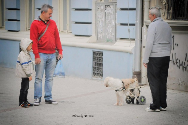 psi čovekovi najbolji prijatelji petface
