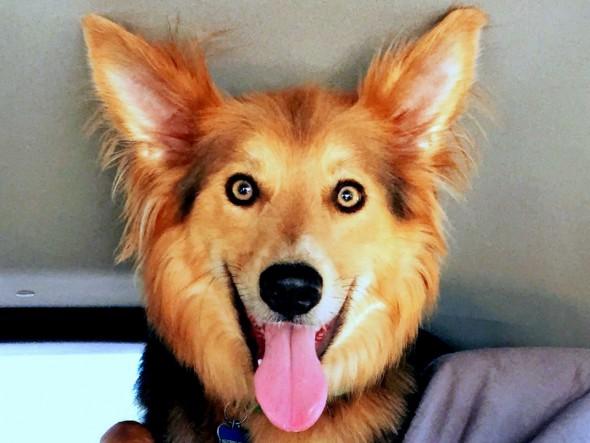 psi govore pogledom petface