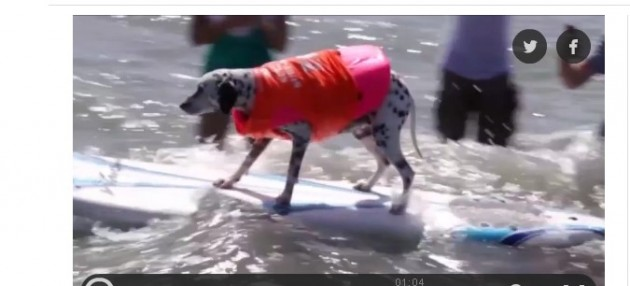 psi se ponašaju kao ljudi petface