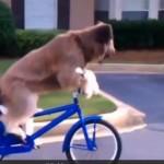 NEMA RAZLIKE: psi se ponašaju kao ljudi