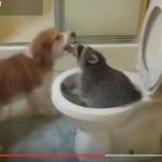 RAZBIBRIGA:  razigrani rakuni vratiće vam osmeh (VIDEO)