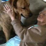 LJUBAV BEZ GRANICA: veza između velikog psa i jedne bake