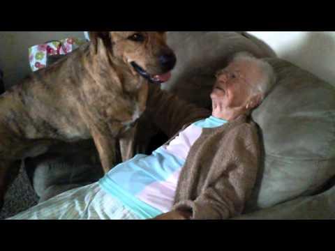 veza između velikog psa i bake petface