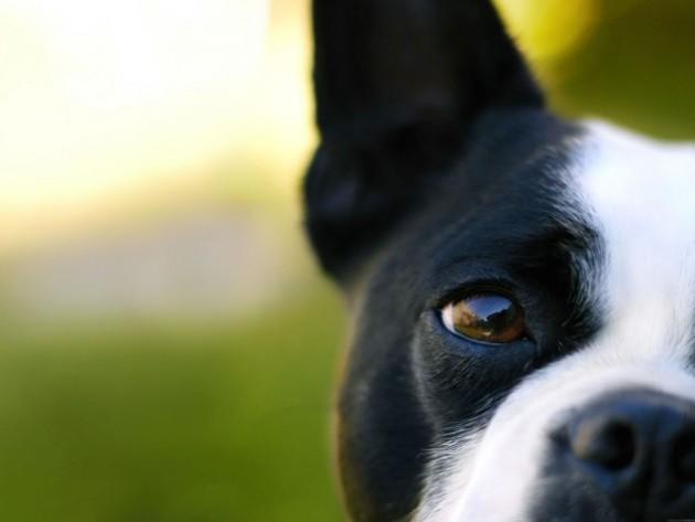 vid kod psa petface