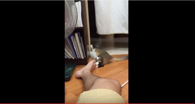 video ove mačke petface