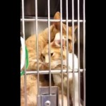 LJUBAV: Čvrsti zagrljaj dve mace u Prihvatilištu obišao svet! (VIDEO)