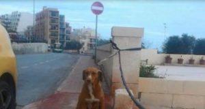 šest godina stoji na ulici petface