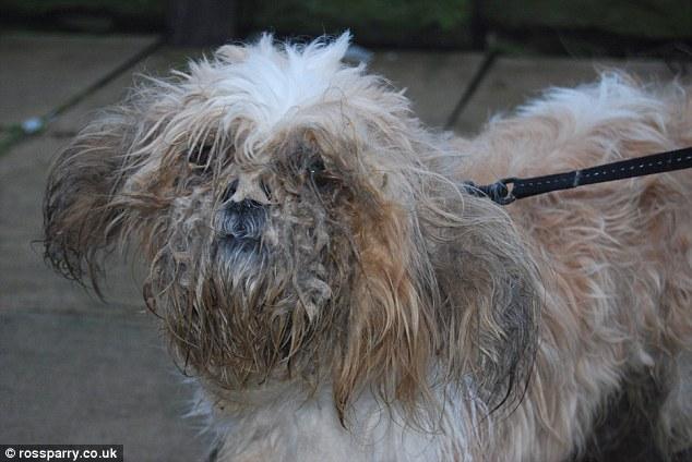 napušteni pas petface