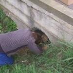 ODŽACI: Dečak spasio 3 šteneta i kuju deleći sa njima svoju užinu, a potom ih izbavio iz cevi!