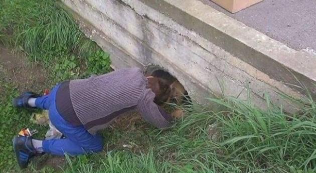 Dečak spasio 3 šteneta i kuju petface