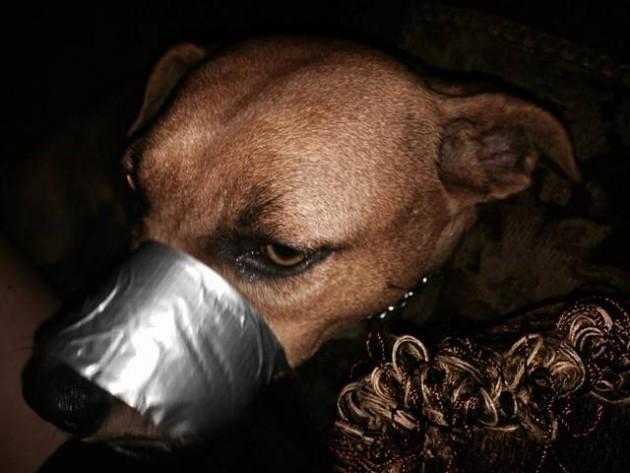 Zalepila psu usta petface