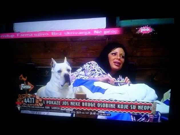 """Pas je žrtva na """"Farmi"""" petface"""