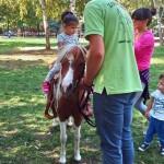 NIŠ: Mališani, druženje sa životinjama i jahanje ponija za vikend!
