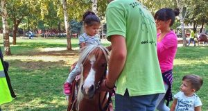 jahanje ponija petface
