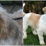 SREĆAN KRAJ: Kada napušteni pas nađe dom pun ljubavi