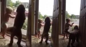 reakcija psa i bebe petface