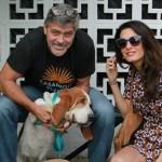 ZA PRIMER: Džordž Kluni udomio psa iz azila!