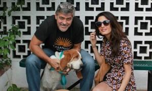 Džordž Kluni udomio psa petface