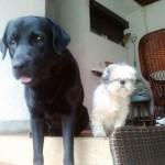 KRALJEVO: Hrabri labrador spasio svoju drugaricu Tifani, iz rupe duboke dva metra!